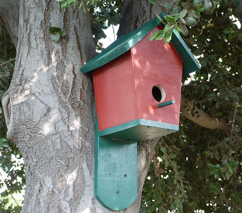 how to build your own bluebird house