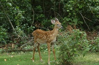 Deer Proofing Your Garden